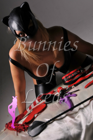 Dominatrix Bunnies Of Leeds escort